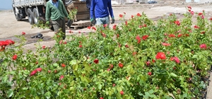 Palandöken Belediyesi'nde 60 bin çiçek ve 5 bin gül toprakla buluşuyor