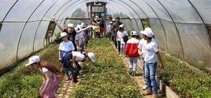 """Giresun'da """"Lider Çocuk Tarım Kampı"""" düzenlendi"""
