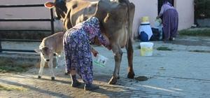 Süt üreticilerine eğitimler devam ediyor