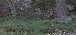 Balık tutarken ayı ile karşılaştılar