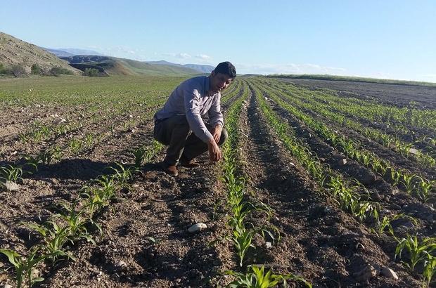 Büyükşehir'den çiftçilere yem bitkileri üretimi desteği