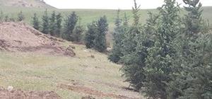 Tutak'ta mesire alanı çalışması başladı