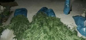Milas'ta 2 kilo esrarla 36 kök hint keneviri ele geçirildi