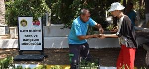 Alanya Belediyesi mezarlıklarda ücretsiz çiçek dağıtacak