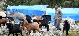 Mersin'de hayvan destekleri hayvancılık için umut oluyor