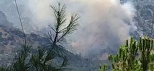 Sultanhisar'da orman yangını