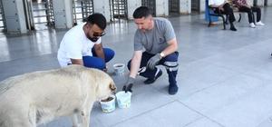Başakşehir'de sokak hayvanları sıcak havada da yalnız değil