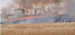 Batman'da 200 dönüm buğday tarlası yandı