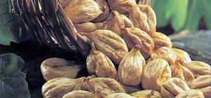 Aydın inciri sağlıklı ürün vasfını korumalı