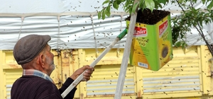 Binlerce bal arısını yağ tenekesine doldurdu
