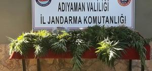 Jandarma uyuşturucu operasyonu gerçekleştirdi