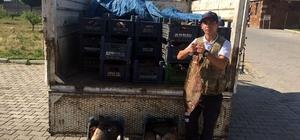 Jandarma, Ahlat'ta 1,5 ton kaçak balık yakaladı