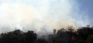 Bodrum'daki yangın söndürüldü