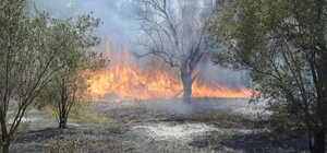 Yangında Zeytin Ağaçları Zarar Gördü