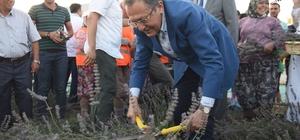 Çiftçi Eğitim Merkezi'nde ilk hasat Başkan Uğur'dan