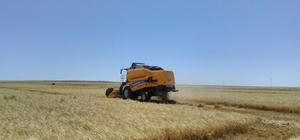 Kulu'da tarımsal mahsul hasadı başladı