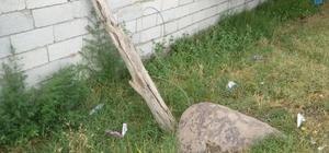 Iğdır'da kopan elektrik teli öldürüyordu