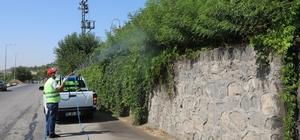 Yeşil alanlar ilaçlanıyor