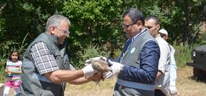 Giresun'da doğaya 25 bin kınalı keklik salındı