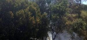 Karpuzlu'da 3 dönüm tarım arazisi kül oldu