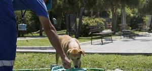 Sokak hayvanlarını sıcakta susuz bırakmıyorlar