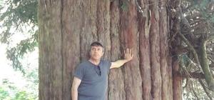 Türkiye'nin en yaşlı Dünyanın 4. yaşlı ağacının tanıtımını Vali Çınar yapacak