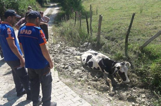 AFAD çamura saplanan inek için seferber oldu