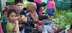 Suriyeli annenin 'Sakarya' sendromu