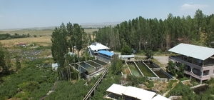 Malazgirt'teki alabalık tesisleri büyük ilgi görüyor