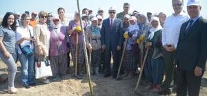 250 fidan, 15 Temmuz Şehitlerinin anısına toprakla buluştu