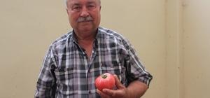 Bilecik'in yerli domatesi tezgahlarda yerini aldı