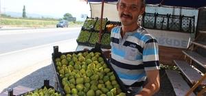 Ziraat Odası'ndan 'erkenci incir' uyarısı