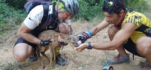 Bisiklet sürücüleri yaralı karacaya can oldu