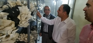 Başkan Özaltun, istiridye mantarı üretim tesisini gezdi