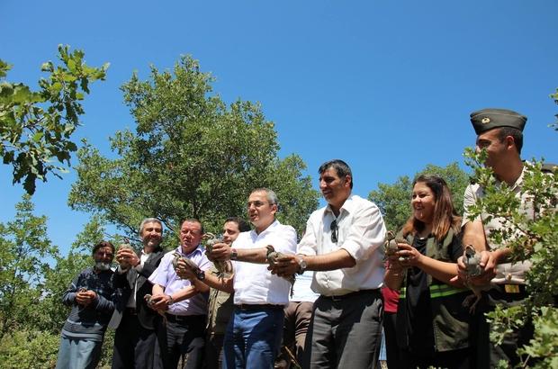 Tosya'da 500 keklik doğaya salındı