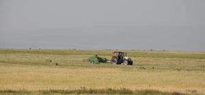 Çiftçilerin ot biçme ve patoz mesaisi başladı