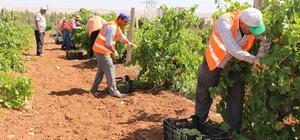 üyükşehir'den dar gelirli ailelere taze meyve ikramı