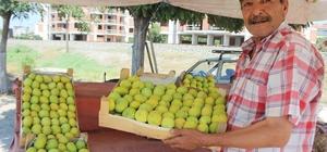 Aydın inciri tezgahlarda yerini aldı