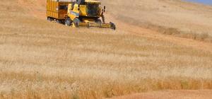 Muş'ta buğday ve arpa hasat dönemi başladı