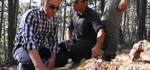 Soğuksu Milli Parkı, milyonlarca yıllık ağaç fosillerine ev sahipliği yapıyor