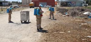 Haliliye belediyesi ilaçlama çalışması