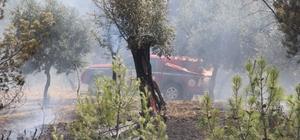 Ormanlık alanda başlayan yangın tarım arazilerine zarar verdi