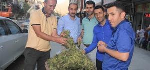 Hakkari'de 'yeşil fındık' satışı