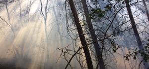 Pasinler'de orman yangını