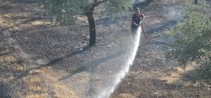 Zeytinlik alanda çıkan yangın itfaiye ekipleri tarafından söndürüldü