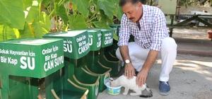 Sokak hayvanlarına geri dönüşümden su kabı