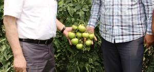 Müdür Görentaş'tan sebze üreticilerine ziyaret