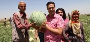 Başkan Gülenç, festivale katılacak çiftçilerin karpuz tarlasını inceledi
