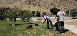 Karşıyaka'da 30 yıllık zeytin ağaçları toprakla buluştu