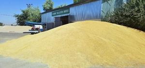 Kayseri Pancar Kooperatifinden sözleşmeli tarım ve tohumluk üretimine büyük destek